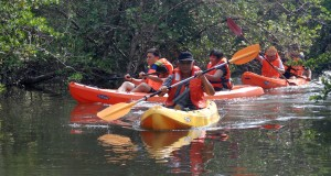 Pulau Batam memiliki puluhan titik hutan bakau yang belum banyak dimanfaatkan oleh pelaku industri wisata.