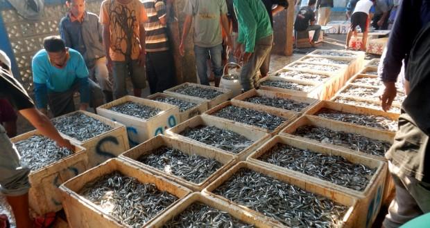 Image result for Hasil Laut dan Perikanan
