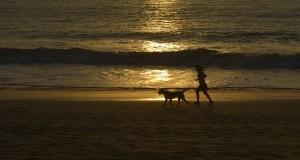 Seorang wisatawan berolah raga ditemani hewan peliharaannya menjelang matahari terbenam di Pantai Gedonganan, Jimbaran, Bali, Kamis (10/10).