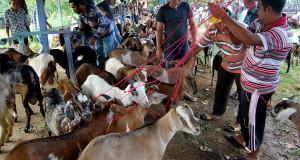 Peternak memasarkan kambing qurban di pasar tradisional, desa Cot Irie, Kecamatan Baruna Jaya, Kab Aceh Besar, Aceh, Sabtu (12/10).