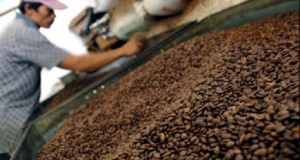 industri kopi