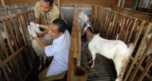 pemeriksaan hewan