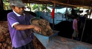 Pekerja menyelesaikan pembuatan pupuk kandang di Karang Tengah, Tangerang