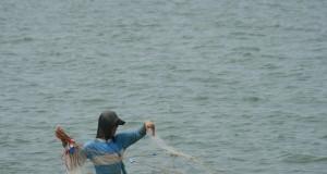 Nelayan menarik jaring ketika mencari udang di pantai Limbangan, Kec. Juntinyuat, Indramayu, Jawa Barat, Minggu (24/11)