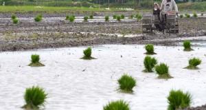 Petani membajak tanah di areal persawahan di Desa Nglames,  Madiun, Jatim,