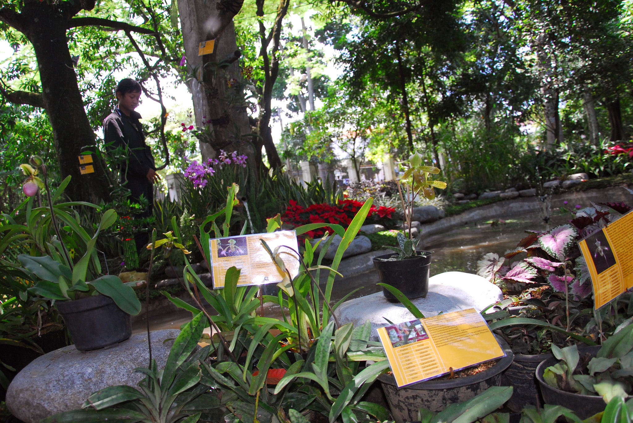 Taman Pustaka Bunga Cilaki Bandung Jawa Barat Berita Daerah