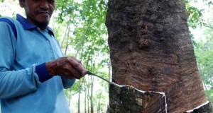 Seorang petani menyadap getah karet di Kecamatan Okura, Pekanbaru, Riau