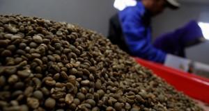 Dua orang pekerja menyelesaikan proses pengolahan biji kopi arabika di pabrik Kopi Pangalengan, Kab. Bandung, Jawa Barat, Sabtu (22/2).