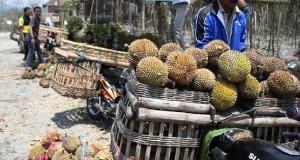 Warga membersihkan kulit buah Durian yang terkena material Vulkanik Erupsi Gunung Kelud saat panen di perkebunan durian lereng Gunung kelud, Desa