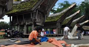 Sejumlah warga menjemur gabah hasil panen di halaman Tongkonan di Ketekesu, Tana Toraja, Sulsel, Jumat (28/2).