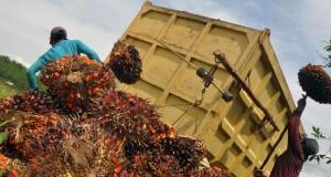 Bertambahnya permintaan atas bahan baku minyak goreng tersebut memicu kenaikan harga komoditas itu dari Rp1.500/kg menjadi Rp1.600/kg.