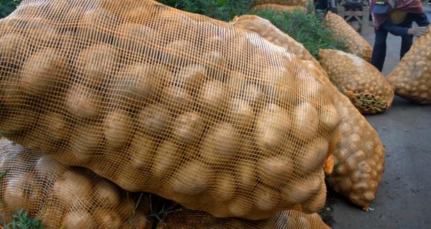 Seorang petani mengangkat keranjang berisi kentang yang baru dipanen di Desa Wonokitri, Kecamtan Tosari, Pasuruan, Jatim, Rabu (30/4)