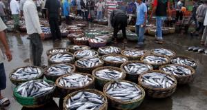 Pedagang mengikuti lelang ikan tongkol di Pelabuhan Perikanan Samudera, Banda Aceh,