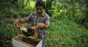 Petani mengecek rumah lebah madu di Karang Joang, Balikpapan, Kalimantan Timur, Selasa (24/6)