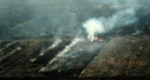 Sebuah escavator melakukan pengerukan tanah di atas lahan perkebunan yang telah dibakar, di kawasan Kecamatan Sungai Ambawang, Kabupaten Kubu Raya, Kalbar, Rabu (6/8). Dari hasil pantauan Helikopter MI-8