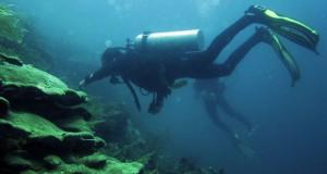 Penyelam dari Alexa Scuba memperhatikan sejumlah biota laut di kawasan Pulau Hari, Konawe Selatan, Sultra, Minggu (14/9)
