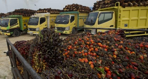 Sejumlah truk bermuatan kelapa sawit menunggu antrean bongkar muat di salahsatu perusahaan pengolahan sawit di Desa Rantau Sakti, Rokan Hulu, Riau, Selasa (16/9).