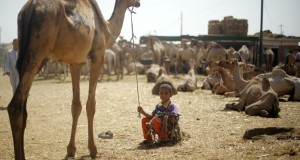 A camel trader's son poses with his father's camels at the Birqash Camel Market on the outskirts of Cairo
