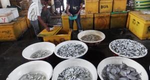 Seorang pedagang menyortir ikan yang dijual di sentra perikanan Pelabuhan Perikanan Muara Angke, Jakarta, Selasa (14/10)