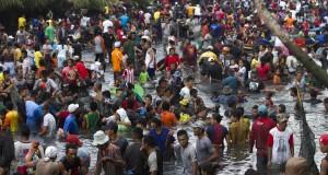Ribuan warga berebutan menangkap ikan lompa (Trisina baelama; sejenis ikan sardin kecil) di sungai Learisa Kayeli, Negeri Haruku - Sameth, Pulau Haruku, Maluku Tengah, Maluku, Sabtu (11/10).