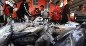 Sejumlah warga memilih ikan tongkol saat proses lelang di tempat pelelangan ikan Karangsong, Indramayu, Jawa Barat, Jumat (28/11).