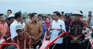 Presiden Joko Widodo (tiga kanan) didampingi Menteri Pertanian Amran Sulaiman (kiri) berdialog dengan Gubernur Lampung Muhammad Ridho Ficardo (dua kiri) ketika berkunjung ke lahan persawahan di Lampung, Selasa (25/11).