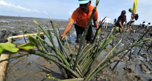antarafoto-tanam-mangrove-pertamina-221114-yu-3