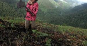 Petani bercocok tanam di pegunungan Singgah Mata yang berada di Kawasan Ekosistem Leuser (KEL), kecamatan Pantan Cuaca, Kabupaten Gayo Lues, Aceh, Selasa (25/11).