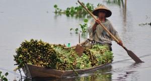 Seorang pekerja membawa tumbuhan eceng gondok (eichornia crassipes) dengan perahu, di Rawa Pening, Kebondowo, Banyubiru, Kabupaten Semarang, Selasa (27/1).