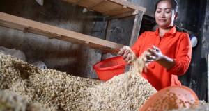 Wulandari (30) membuat tempe dari kedelai impor di Kelurahan Sanan, Malang, Jawa Timur, Selasa (10/3)