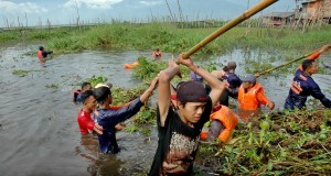 Warga bergotong royong membersihkan tanaman eceng gondok di Danau Rawa Pening, Tuntang, Kabupaten Semarang, Jateng, Minggu (26/4)