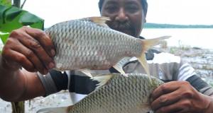 Seorang warga menunjukan ikan hasil tangkapannya dari Waduk Kedung Ombo di Desa Klewor, Kemusu, Boyolali, Jawa Tengah, Minggu (26/4).