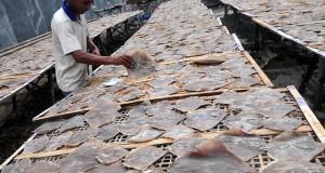 Pekerja menjemur ikan asin pari di industri pengolahan ikan asin Jongor, Tegal, Jateng, Rabu (1/4).