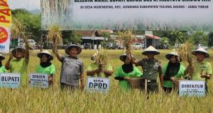 Dirjen Sarana dan Prasarana Kementrian Pertanian RI, Sumarjo Gatot Irianto (tiga dari kiri) didampingi Bupati Tulungagung Syahri Mulyo (kiri), beserta sejumlah pejabat setempat mengangkat potongan tanaman padi saat panen raya benih padi unggul