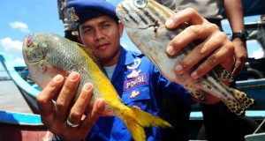 Seorang anggota Direktorat Polisi Air (Ditpolair) Polda Kalbar memperlihatkan ikan hasil tangkapan kapal pengguna bahan peledak, di Mako Ditpolair Polda Kalbar, Sabtu (4/4).