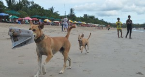 Dua ekor anjing berada di Pantai Kuta, Kabupaten Badung, Bali, Selasa (7/4). Provinsi Bali saat ini mengalami kekurangan stok Vaksin Anti-Rabies (VAR)