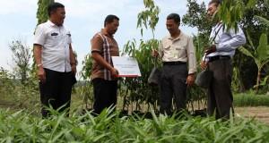 Sekretaris Perusahaan Pertamina Gas Adiatma Sardjito (kedua kanan) menyerahkan secara simbolis bibit pohon kepada perwakilan Desa Pasar Melintang, Deli Serdang, Sumatera Utara, Rabu (29/4). Pertagas menyerahkan 1.000 bibit pohon di kawasan tersebut dalam rangka penghijauan dan kepedulian terhadap lingkungan. ANTARA FOTO/Irsan Mulyadi/ss/nz/15