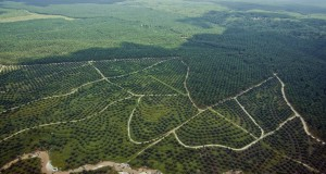 Hamparan tanaman kelapa sawit terlihat dari udara di Provinsi Riau, Rabu (29/4).