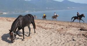 Pekerja memacu kuda pacu di Pantai Talise, Teluk Palu, Sulawesi Tengah, Minggu (10/5). Memandikan kuda pacu dan membersihkannya dengan air laut setiap Minggu pagi adalah bagian dari perawatan kuda dan dipercaya meningkatkan stamina kuda saat dipacu. ANTARA FOTO/Basri Marzuki/Rei/ama/15.