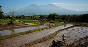 Seorang petani membajak sawah untuk persiapan penanaman padi di Pasuruan, Jawa Timur, Kamis (21/5). Kementerian Pertanian (Kementan) menargetkan produksi padi meningkat dari 70,83 juta ton gabah kering giling (GKG) di tahun 2014 menjadi 73,40 juta ton gabah kering giling (GKG) pada tahun 2015. ANTARA FOTO/Moch Asim/Zk/ed/pd/15