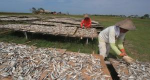 Sejumlah pekerja menjemur ikan asin tanjan di desa Lombang, Juntinyuat, Indramayu, Jawa Barat, Senin (6/7). Harga ikan asin mengalami kenaikan dari harga Rp. 9.000 per kilogram menjadi Rp. 12 ribu per kilogram karena sedikitnya pasokan ikan dari nelayan serta meningkatnya permintaan ikan asin tersebut. ANTARA FOTO/Dedhez Anggara/Rei/pd/15.