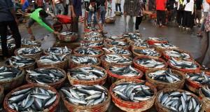 Nelayan menata puluhan keranjang ikan saat berlangsung pelelangan ikan di Terminal Pelabuhan Perikanan Lampulo, Banda Aceh, Sabtu (25/7). Hasil tangkapan ikan pasca Lebaran menurun karena nelayan belum beraktivitas normal sehingga memicu naiknya  harga harga ikan menjadi Rp450.000 hingga Rp480.000 per keranjang menurut jenisnya. ANTARA FOTO/Ampelsa/Rei/foc/15.