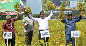 Menteri Pertanian Andi Amran Sulaiman (tengah) didampingi Direktur Jenderal Tanaman Pangan Hasil Sembiring (kiri) dan Bupati Sidoarjo Saiful Ilah (kanan) saat panen raya kedelai di Sidoarjo, Jawa Timur, Kamis (30/7). Kementerian Pertanian membangun sebanyak 1,3 juta pembangunan fisik dan mengirim pompa air di seluruh wilayah Indonesia untuk mengatasi kekeringan. ANTARA FOTO/Umarul Faruq/Zk/ss/kye/15