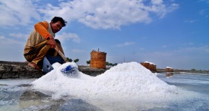 Petani memanen garam di Wedung, Kabupaten Demak, Jateng, Jumat (3/7). Kementerian Kelautan dan Perikanan (KKP) menargetkan produksi garam nasional, baik garam petani maupun produksi PT Garam (persero) meningkat dari 2,5 juta ton pada 2014 menjadi 3,5 juta ton pada 2015 ini. ANTARA FOTO/Aditya Pradana Putra/Rei/pd/15.