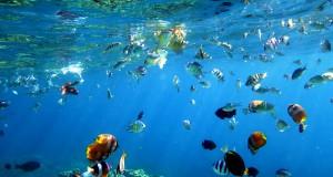 Berbagai jenis ikan karang berenang di terumbu karang taman laut Olele, Kabupaten Bonebolango, Gorontalo, Selasa (1/9). Taman laut Olele mrupakan salah satu lokasi penyelamanan dan snorkling yang memiliki terumbu karang dan ekosistem laut yang masih terjaga serta memiliki berbagai jenis biota laut. ANTARA FOTO/Adiwinata Solihin/foc/15.