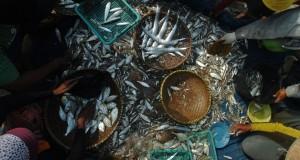 Nelayan memilah ikan hasil tangkapan mereka di bibir Pantai Timur Pangandaran, Jawa Barat, Senin (7/9). Kementerian Kelautan dan Perikanan (KKP) menargetkan meningkatkan produksi kelautan dan perikanan sebesar dua kali lipat atau menjadi sekitar 40-50 juta ton pada tahun 2019 nanti. ANTARA FOTO/Adeng Bustomi/foc/15.