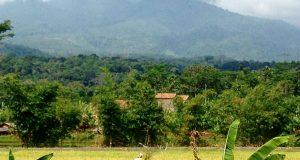 Suasana pedesaan di kaki Gunungjati Jawa Tengah (Photo: Fanny Sue/ BD)