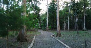 hutan timika