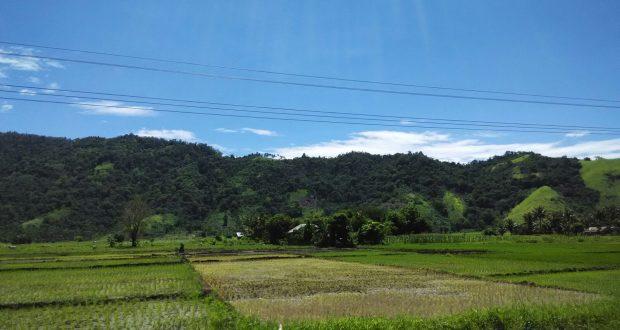 luas tanah untuk sawah