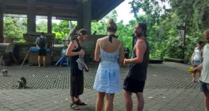 wisatawan mongkey forest